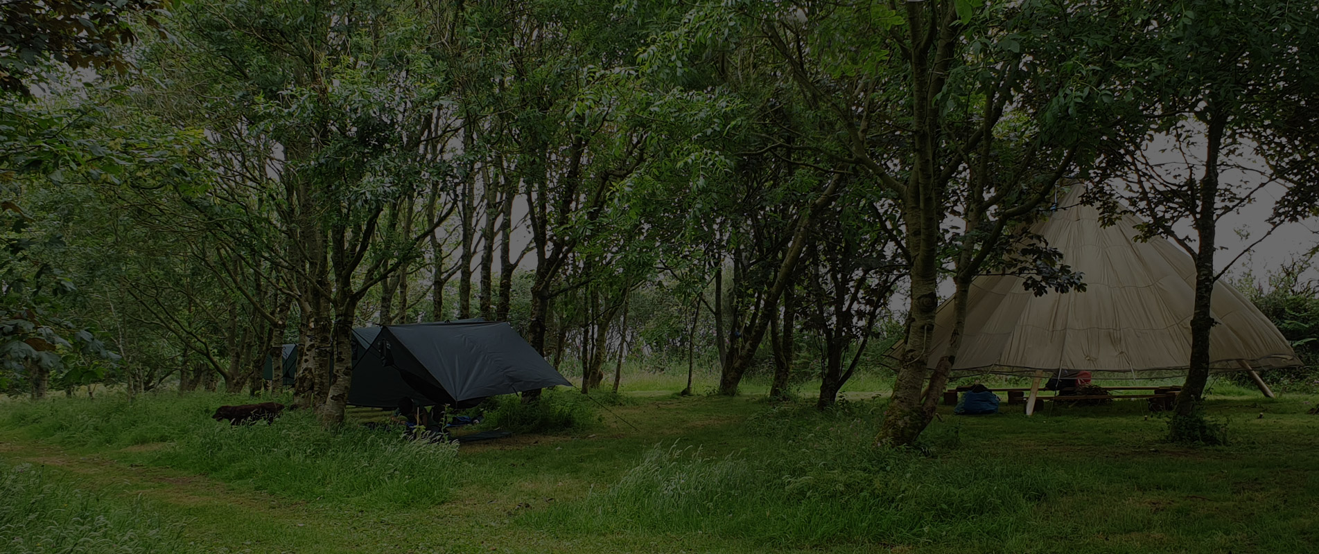 Home - Wildwoodlands, Cornwall